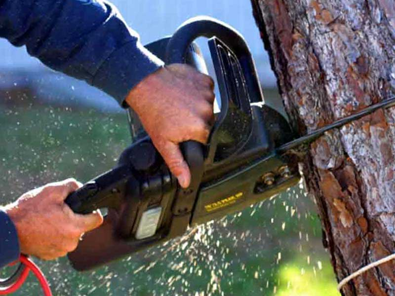man uses electric chainsaw cut dead Tree removal san Jose