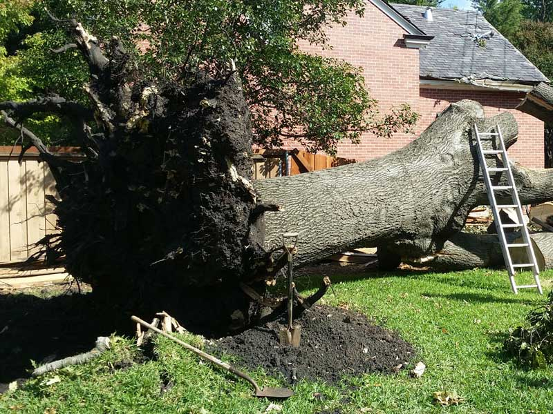 an uprooted tree fell on house after Tree Removal San Jose