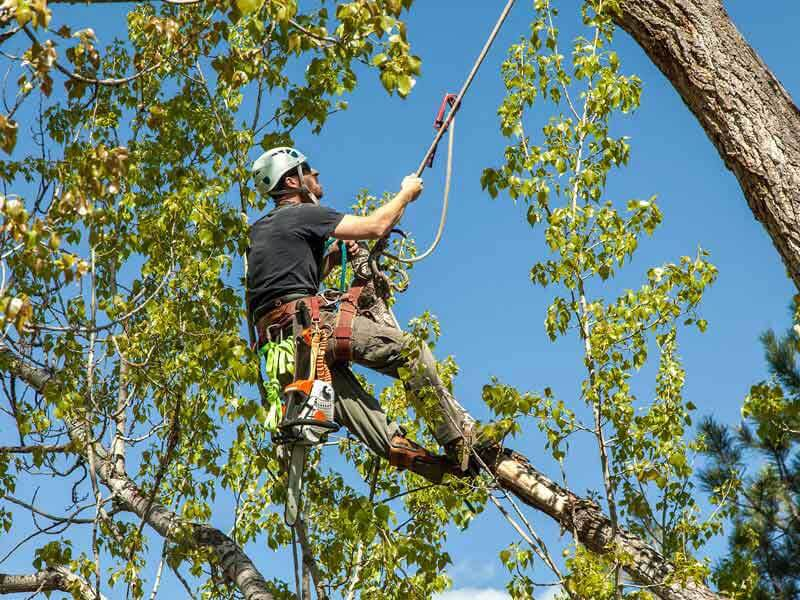 Special About Tree Removal Tree removal san Jose