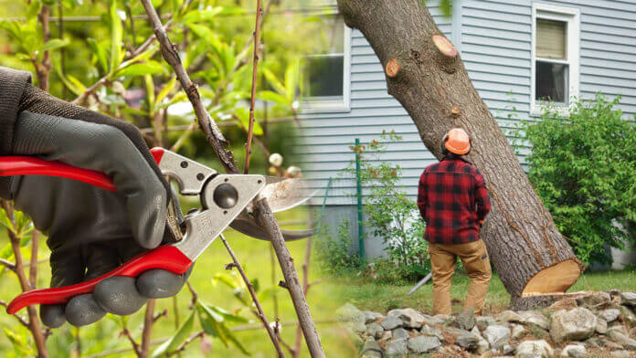 manual worker removing tree residential area Tree removal san Jose