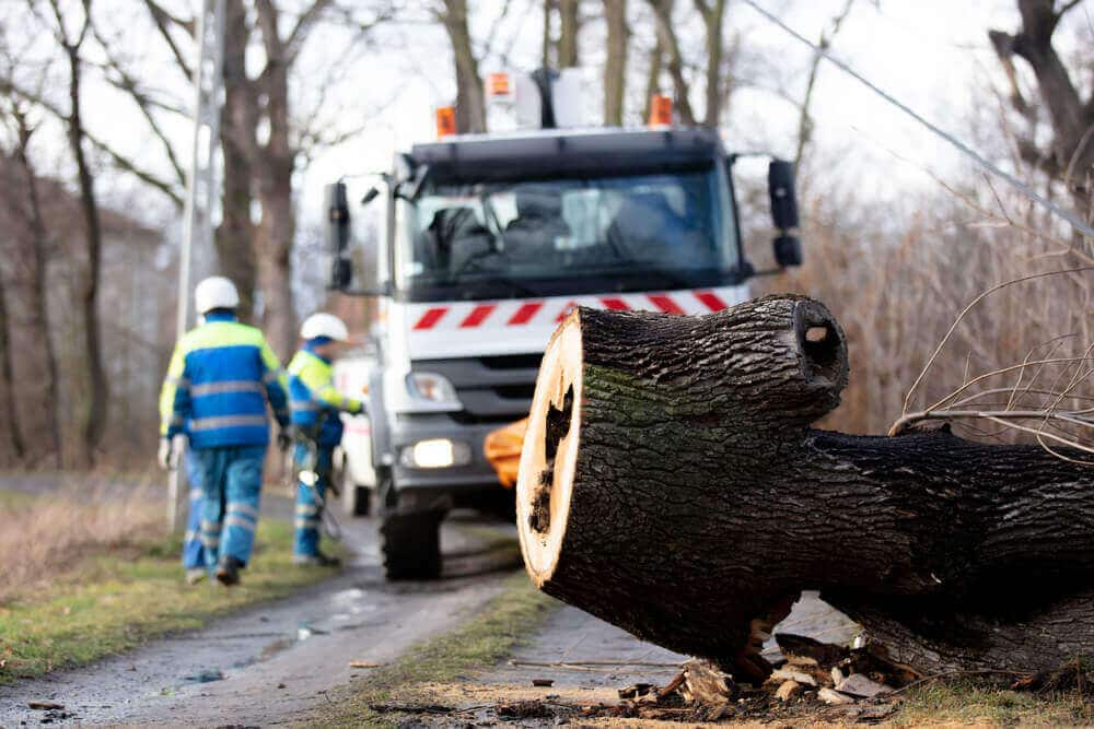 Emergency service remove a rotten tree that Emergency Tree Services San Jose
