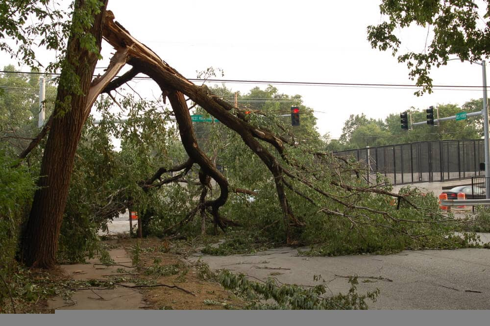 tree down across intersection st Louis Storm Damage Cleanup San Jose